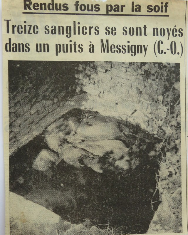 _-8-4-2020-sangliers noyés 005